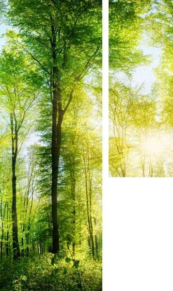 Fotogardinen: LANGE SONNENSTRAHLEN IM WALD, links (80x230 cm), rechts (50x140 cm)