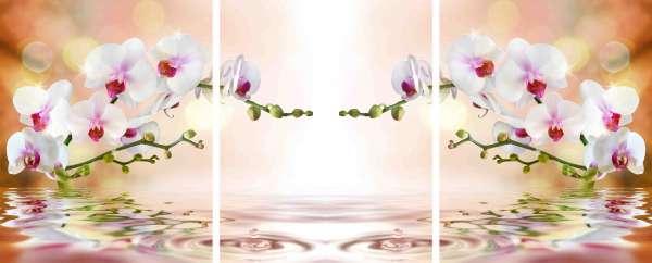Chiffon-Fotogardinen: PERFEKTE ORCHIDEE / 3 Schals HxB: 150x120 cm
